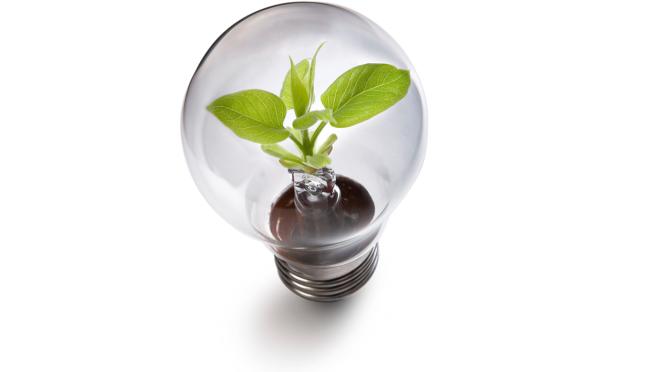 plantlight